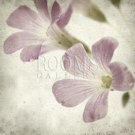 תמונה לסלון של פרחים סגלגלים עדינים על רקע לבנבן