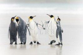 תמונה לסלון פינגווינים עם חוש הומור