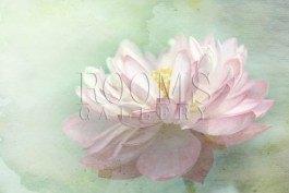 תמונות לסלון גם פרח לוטוס עובד