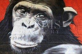 תמונה לבית ולסלון שעושה קטע למי קראת קוף?