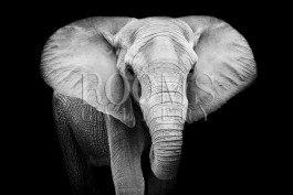פיל יכול להדהים אתכם בסלון תמונה לבית עם עוצמה