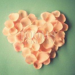 פרח לב הזהב תמונה לבית עם צבעוניות פסטלית עדינה