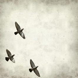 תמונת סלון ריבועית בשחור לבן ציפורים עפות