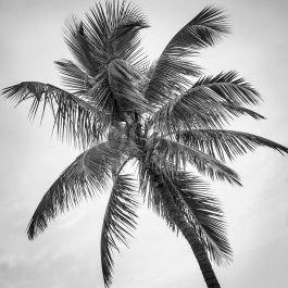 תמונת טבל בשחור לבן לסלון דקל