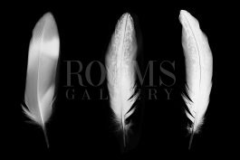 תמונות בשחור לבן לחדר עבודה