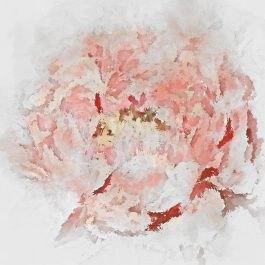 תמונת פרח אבסטרקטי וורוד